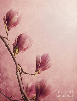 Digital Art - Magnolia by Jelena Jovanovic