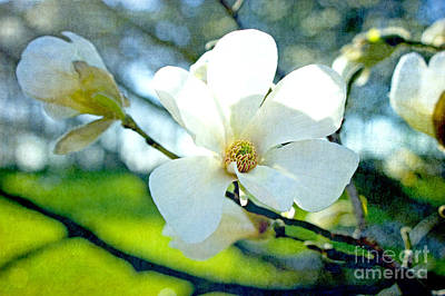 Photograph - Magnolia Joy by Valerie Fuqua
