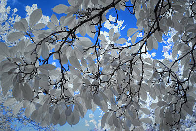 Ps I Love You - Magnolia Leaves against a Blue Sky by Randall Nyhof