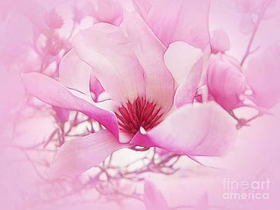 Photograph - Magnolia Mist by Judi Bagwell