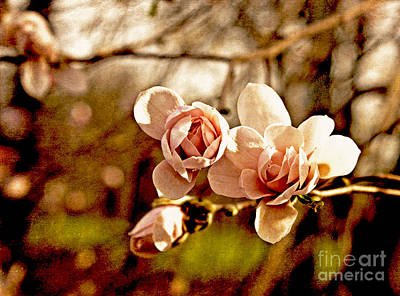 Photograph - Magnolia Mood In Pink by Valerie Fuqua