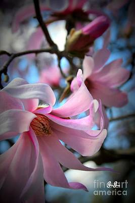 Photograph - Magnolia Morning by Geri Glavis