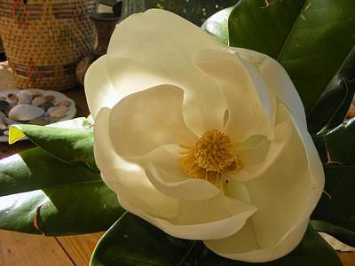 Art Print featuring the photograph Magnolia by Nancy Kane Chapman