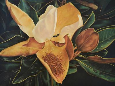 Pastel - Magnolia - Pastel by Ben Kotyuk