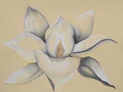 Pastel - Magnolia Pastel by Patricia Beebe