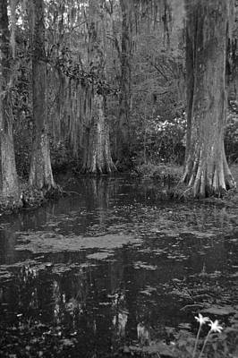 Cypress Swamp Photograph - Magnolia Plantation Gardens In Black And White by Suzanne Gaff