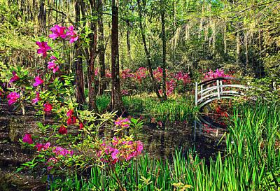 Recent Photograph - Magnolia Plantation by Marcia Colelli