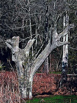 Photograph - Magnolia Plantation Swamp by Bill Barber
