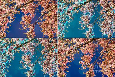 Digital Art - Magnolia Quad by Susan Cole Kelly Impressions