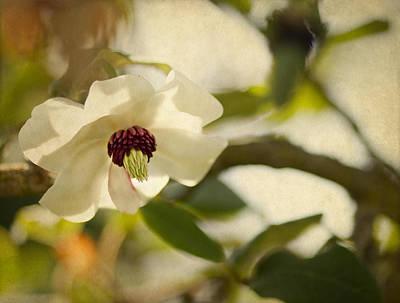 Magnolia Art Print by Rebecca Cozart