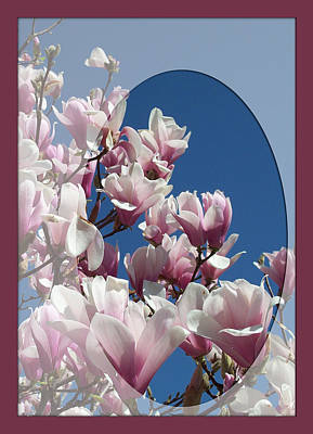 Photograph - Magnolia Splendor by Georgia Hamlin