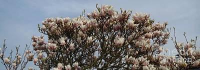 Photograph - Magnolia by Susanne Baumann