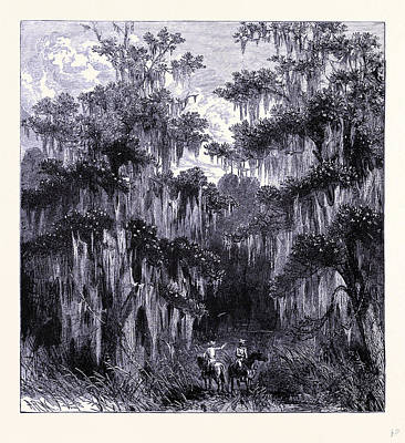 Swamp Drawing - Magnolia Swamp United States Of America by American School