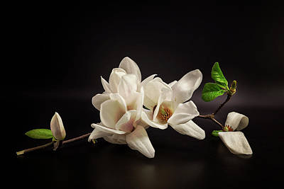 Orchid Wall Art - Photograph - Magnolia by Tony08
