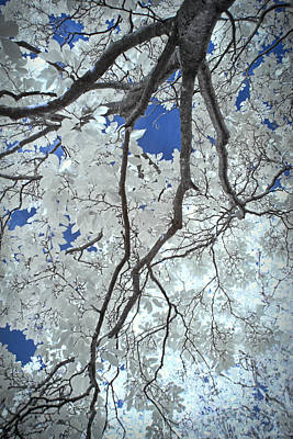 Photograph - Magnolia Tree Branch Against A Blue Sky by Randall Nyhof