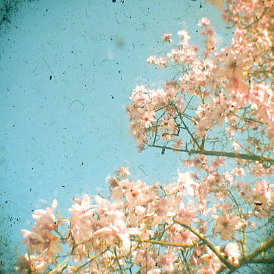 Cassia Blossoms Photograph - Magnolia Tree by Cassia Beck