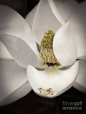 Photograph - Magnolia Vintage Blossom  by Ella Kaye Dickey