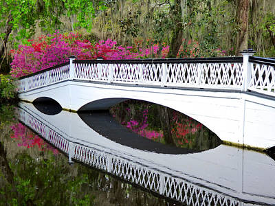 Magnolia White Bridge Art Print