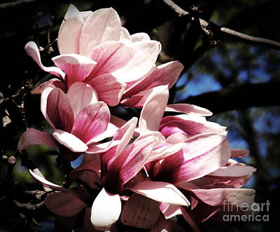 Abstract Utensils - Magnolias at Dusk by Tina M Wenger