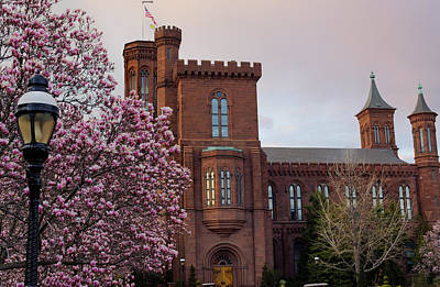 Smithsonian Museum Photograph - Magnolias Near The Castle by Andrew Pacheco