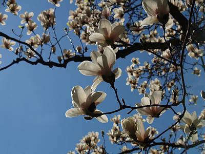 Magnolias Art Print by Rita Haeussler