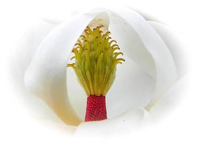 Photograph - Magnolias Secret 2 by Christy Usilton