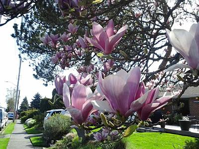 Photograph - Magnolias Streetside by David Trotter