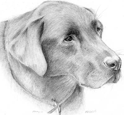 Black Labrador Drawing - Magnus by Mary Mayes