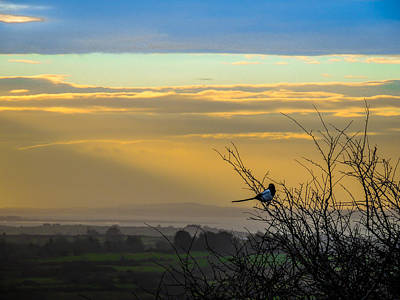 Photograph - Magpie And Misty Morning Over Ireland's County Clare by James Truett