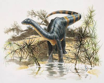 Magyarosaurus Art Print