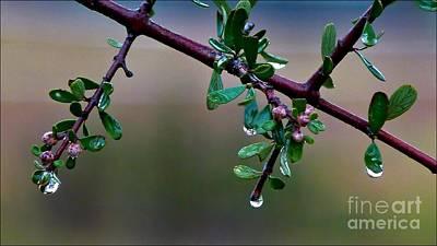 Photograph - Mahogany Rain by Julia Hassett