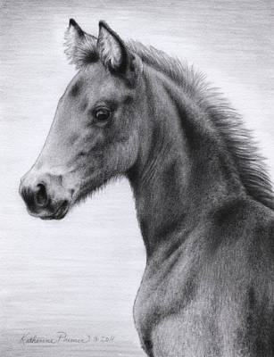 Morgan Horse Drawing - Mai Tai by Katherine Plumer