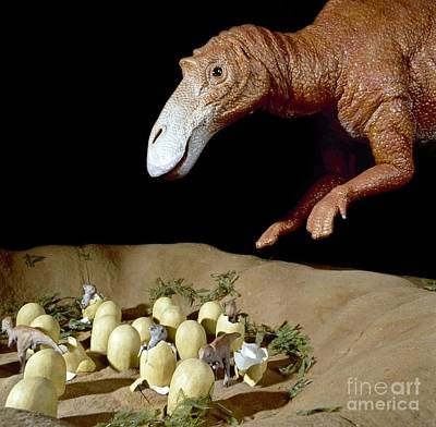 Natural History Museum London Photograph - Maiasaura Dinosaur Nest, Museum Model by Natural History Museum, London
