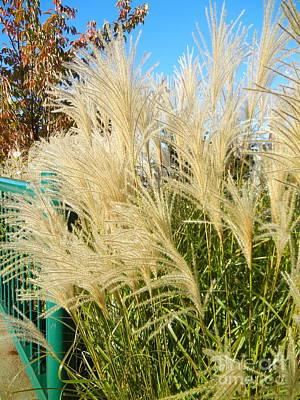 Photograph - Maiden Grass by KD Johnson