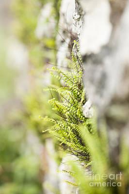 Hair Abstract Art Photograph - Maiden-hair Spleenwort by Anne Gilbert