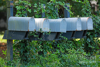 Mail Box Photograph - Mailboxes And Ivy by Louise Heusinkveld