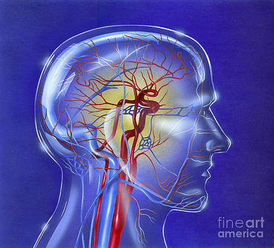 Neuroscience Digital Art - Main Arteries And Veins Within A Glass by TriFocal Communications