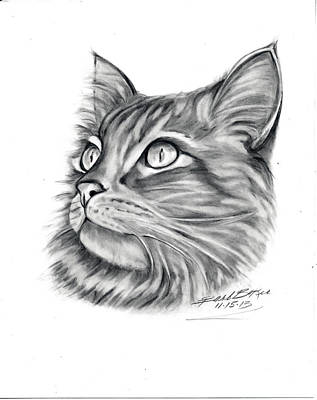 Maine Coon Art Print by Barb Baker