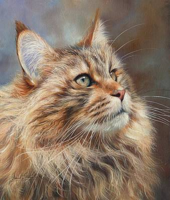 Maine Painting - Maine Coon Cat by David Stribbling