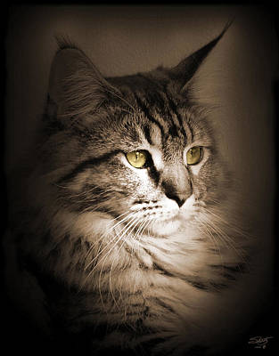 Photograph - Maine Coon Portrait by IM Spadecaller