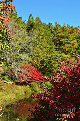 Digital Art - Maine Fall Colors by Eva Kaufman