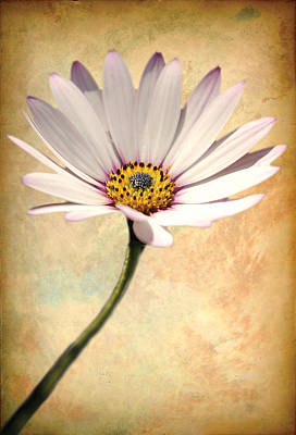 Digital Art - Maisy Daisy by David Davies