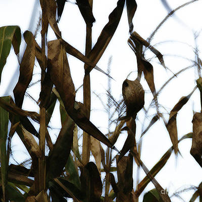 Photograph - Maize by Linda Shafer
