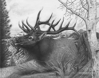 Drawing - Majestic Bull Elk by Barb Schacher
