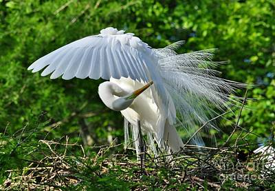 Art Print featuring the photograph Majestic Egret by Kathy Baccari