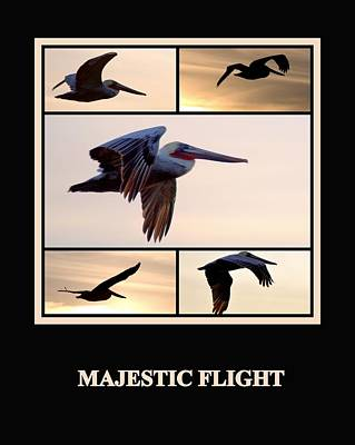 Photograph - Majestic Flight by AJ  Schibig