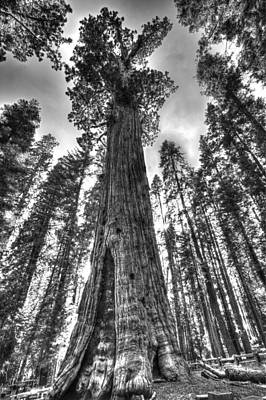 Photograph - Majestic Giant by Tony Santo