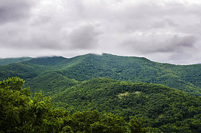 Photograph - Majestic Green by Carolyn Marshall