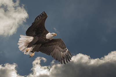 Photograph - Majestic by Jack R Perry