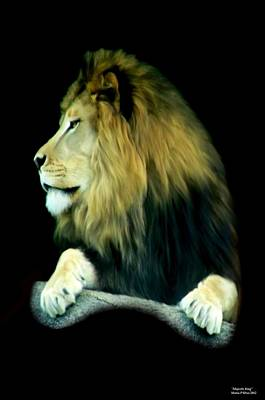 Photograph - Majestic King by Maria Urso